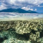Volunteering in Madagascar - Turtle Towers coral reef