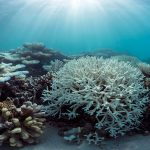 MRCI Contributes Towards CORDIO East Africa Post-Coral Bleaching Assessment Report