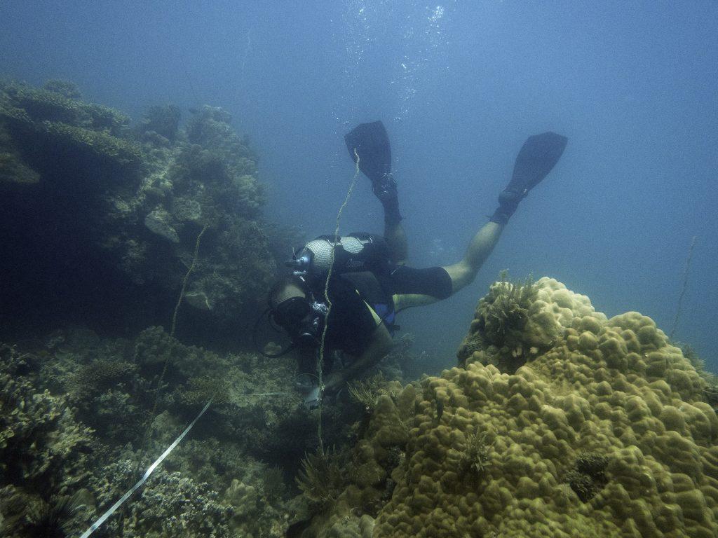 Tilo Diving - Madagascar Volunteer