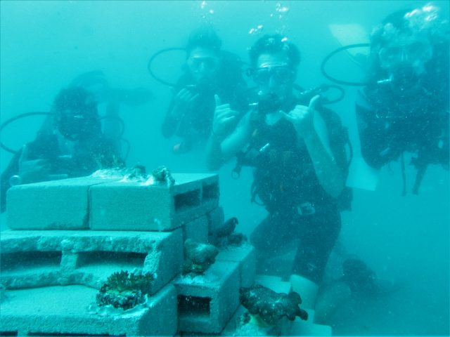 Artificial Reef Diving 2