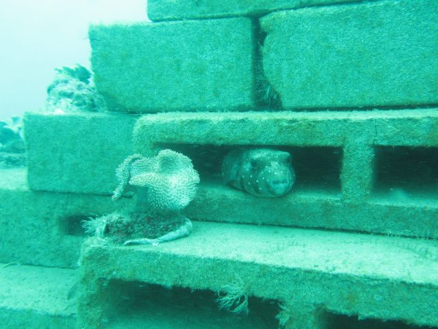 Artificial Reef Diving 3