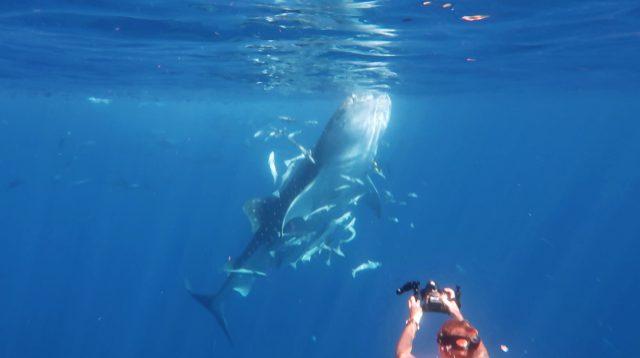Whale Shark Season 1