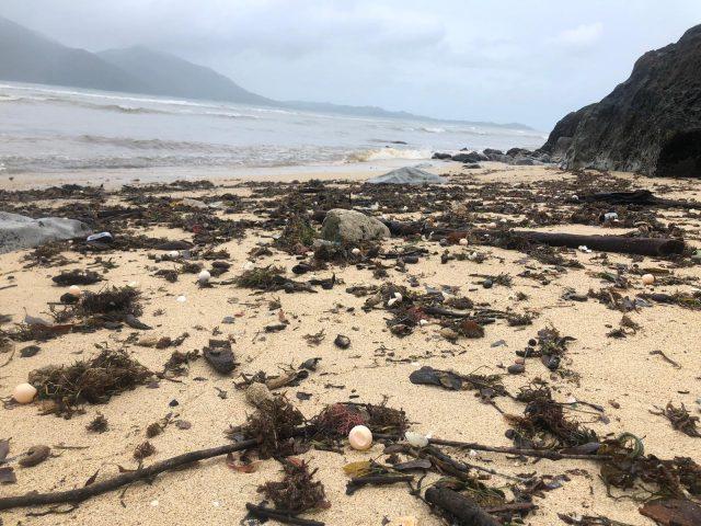 volunteers-beach-clean